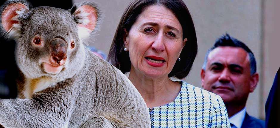 Koalagate : It's A Knockout  ! Gladys Wins, Barilaro Goner