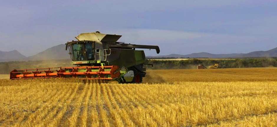 Now : 'Wheat Wars' - China to put wheat 'under microscope'