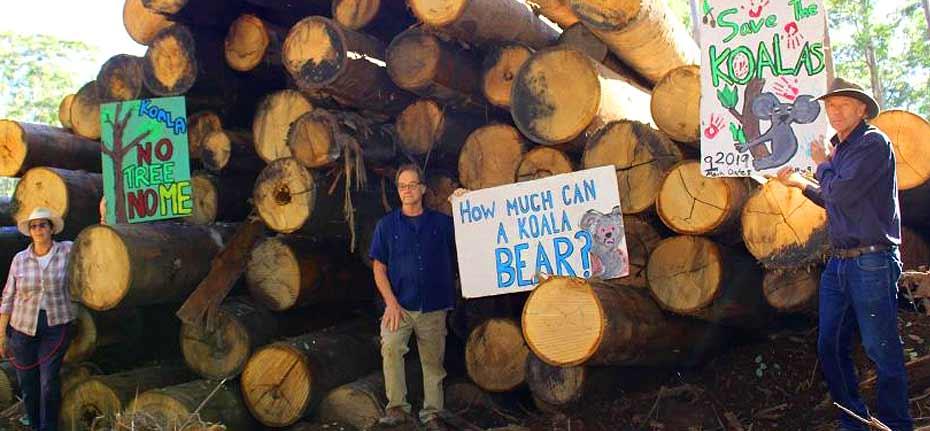 'Koalagate 2.0' Ghost of Barilaro rips up NSW logging rules