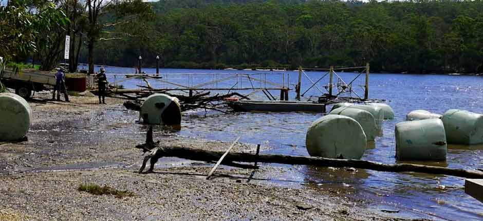 Port Oyster Farmers 'Devastated' - Floods wipe out crop