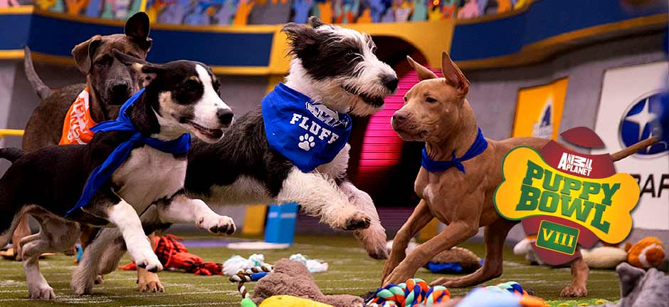 Animal Planet's pup-ular 'Puppy Bowl' to go on as planned