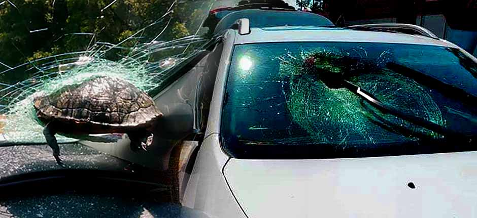 Turtle crashes through a car windshield, woman hospitalised