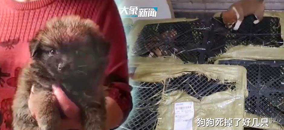 stupid Chinese 'mystery animal box' craze causes outrage