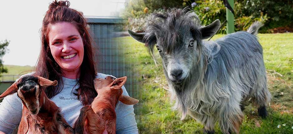 Miniature goats bring success for high school student